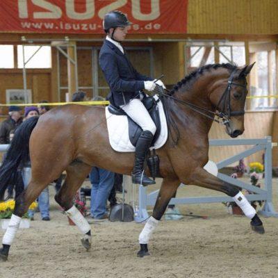 DSC6776 400x400 - Sportpferde