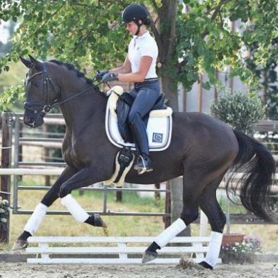 Laurencio Quad e1572778836151 400x400 - Sportpferde