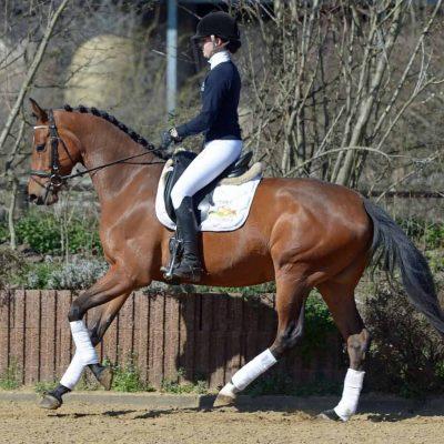 Lena 400x400 - Sportpferde