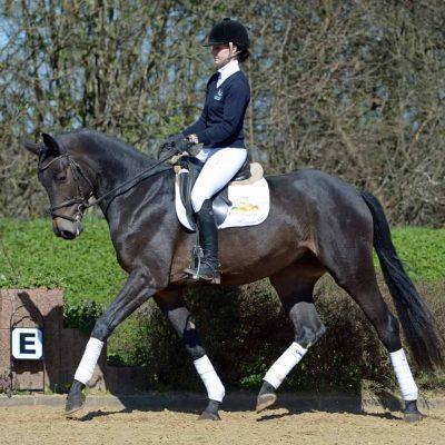 SisterAct 400x400 - Sportpferde