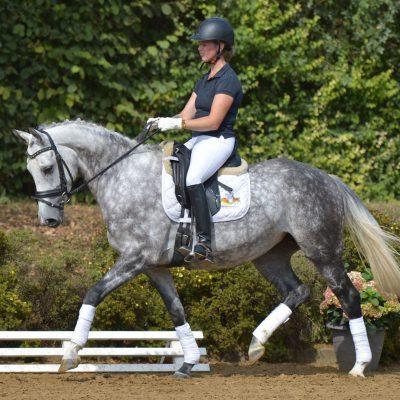 Laura 400x400 - Sportpferde