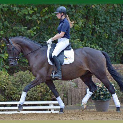 Lukas 400x400 - Sportpferde