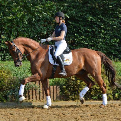 DAVIDOFF QUADR NEU 400x400 - Sportpferde