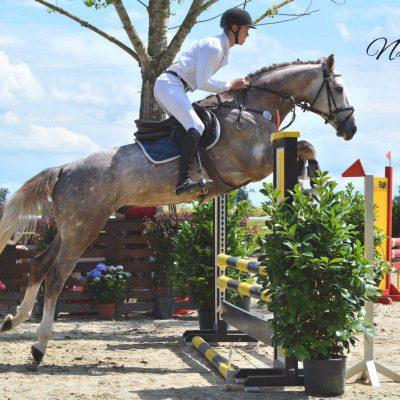 GRINGO 400x400 - Sportpferde
