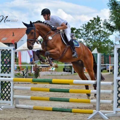 IMG 20190616 WA0016 400x400 - Sportpferde