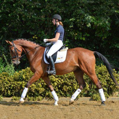 Fab QUAD 400x400 - Sportpferde