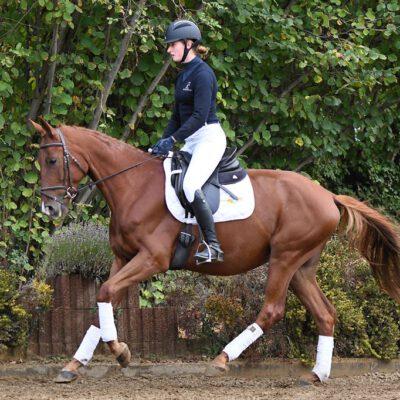 DSC 2204 400x400 - Sportpferde