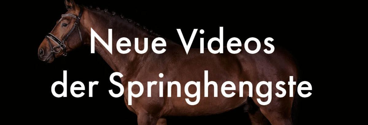 Neue Videos scaled - Hengste
