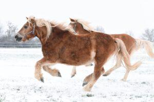 DSC 5258 300x200 - Galerie: Schulponys im Schnee