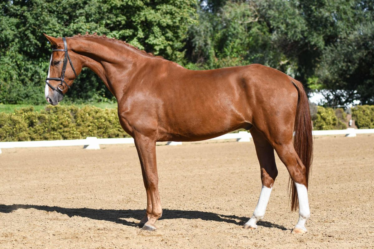 DSC 0417 scaled - Fortissimus